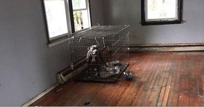 Diese Hunde wurden zum Sterben eingesperrt!