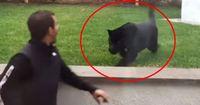 Er lebt über Jahre mit wilden Raubkatzen zusammen. Dann wird er plötzlich angegriffen!