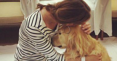 """""""Comfort Dogs"""" - Diese Hunde haben einen wichtigen Job"""