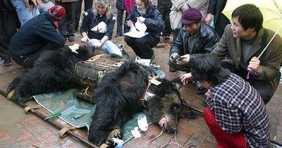Dieser Bär wurde sein Leben lang gefoltert!