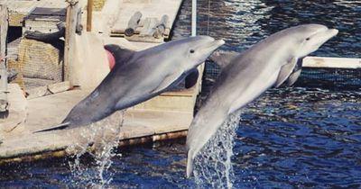 Diese süßen Tiere könnten dich problemlos töten