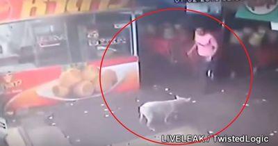 Geniales Video: Hundehasser will Tier treten... doch das Karma schlägt zurück!