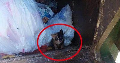 Er holte den Müll ab - und etwas starrte ihn aus der Tonne heraus an...
