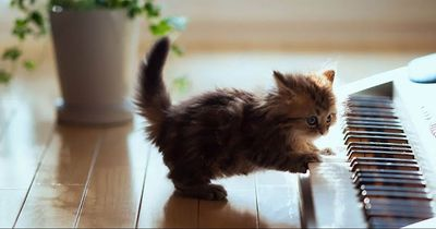 Diese Fehler in der Katzenerziehung sollte man vermeiden