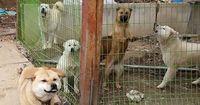 Du wirst nicht glauben, was sie mit diesen Hunden machen wollten!