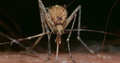 Forscher entwickeln eine Falle gegen Mücken