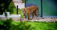 Das Besucherprogramm dieses Zoos ist nichts für schwache Nerven...