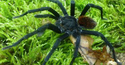 Von dieser neu entdeckten Spinnenart solltest du dich lieber fernhalten