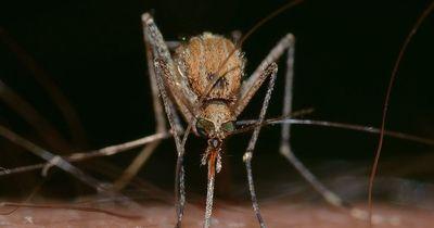 So wehrt man Stechmücken und Wespen im Sommer effektiv ab