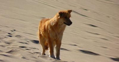 Dieser arme Hund wurde zum Sterben in der Wüste zurückgelassen!