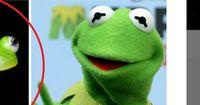 Endlich wurde Kermit der Frosch gefunden