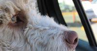 Hund im Auto: Wenn es doch mal kracht, wird es richtig gefährlich!