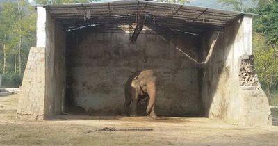 Dieser Elefant lebte 28 Jahre angekettet!