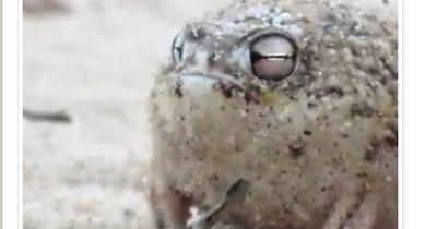 Tiere, die absolut unecht aussehen - die aber wirklich existieren