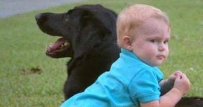 Dieser Hund enthüllte das schreckliche Geheimnis dieser Babysitterin