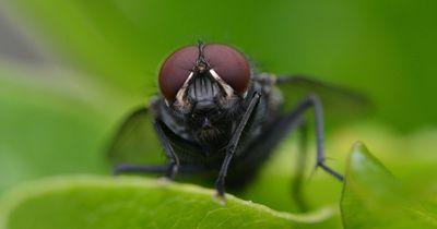 Unglaublich: Forscher entwickeln zum ersten Mal ein 3D-Modell einer Fliege!