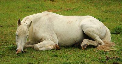 Pferdeschutzgebiet entpuppt sich als Hölle auf Erden