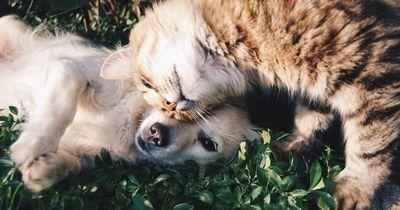 Diese Katze denkt ernsthaft, sie wäre ein Hund! Das wirst du nicht glauben!