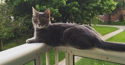 Solltest du deine Katze auf den Balkon lassen?