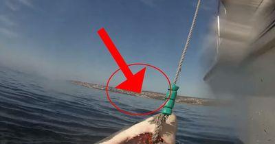 Ein Hai sorgt wieder für Aufregung auf der ganzen Welt!