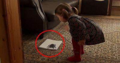 Dieses Mädchen hat keine Angst vor einer Vogelspinne