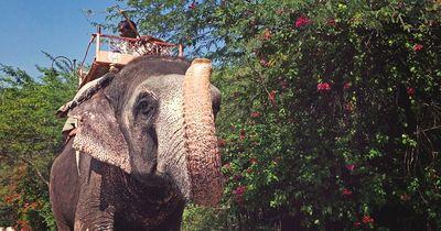 Die Wahrheit übers Elefantenreiten