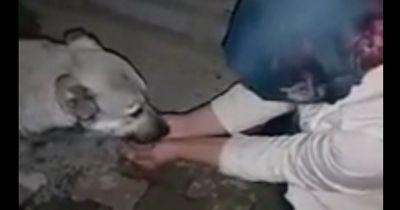 Sie ließ den Straßenhund aus ihrer Hand trinken. Wie er sich bedankte? Unglaublich!