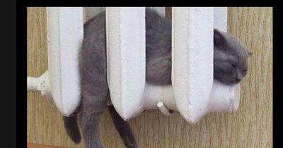 Diese Tiere lieben die Wärme genauso wie du und ich
