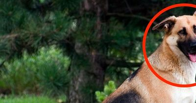 23-Jähriger verprügelt seinen Hund in aller Öffentlichkeit brutal!