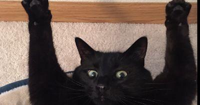 Diese Katzen merken gar nicht, was sie da merkwürdiges machen