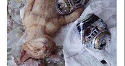 Bilder, die beweisen, dass Tiere sehr wohl Emotionen haben!
