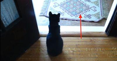 Diese Katze wartet auf etwas ganz Besonderes...