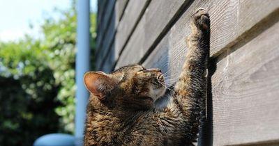 Deshalb müssen alle Katzen Kratzen