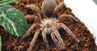 Aus einer Spinne werden zwei!