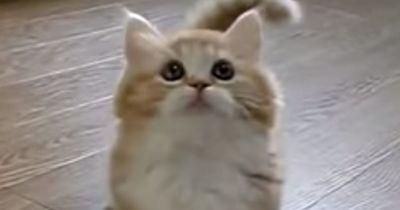 Was dieses Katzenbaby fasziniert, lässt mehr als 30 Millionen dahinschmelzen.