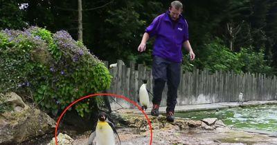 Dieser Pinguin hatte Angst vor Wasser - Was sein Trainer dann tat, ist GENIAL!