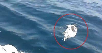 Fischer entdeckten Müll im Meer...