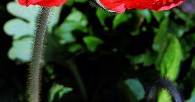 Vorsicht: Diese Pflanze ist für Tiere pures Gift