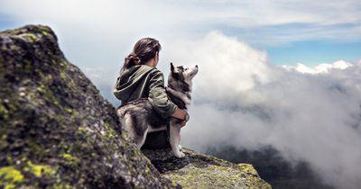 Urlaub mit Hund und Katze