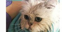 Gut zu wissen: Soll man Katzen baden?
