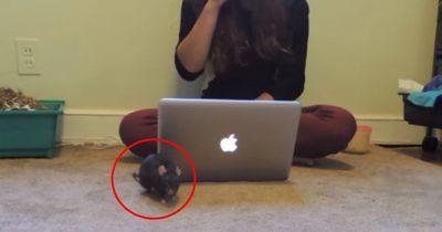 Sie hat ihr Haustier total im Griff