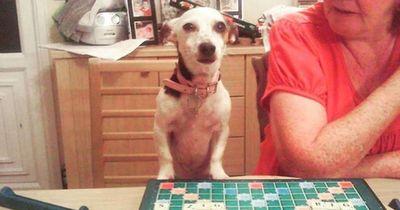 Omas Hund - das Zentrum der Welt!
