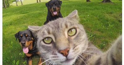 Diese Katze macht bessere Selfies als du!