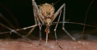 Stechmücken: Was lockt sie wirklich an?