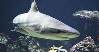 Teil 2: Dinge, die viel gefährlicher und tödlicher als Haiattacken sind