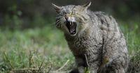 Verrückte Fakten über Katzen, die fast niemand kennt