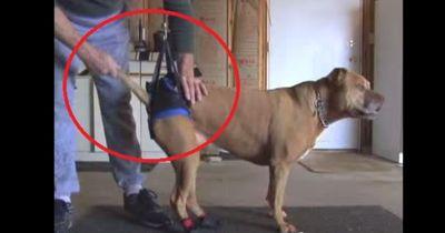 Durch einen Ärztefehler braucht dieser Hund jetzt besondere Pflege
