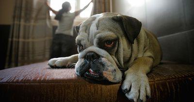 So hat dein Haustier richtig Spaß