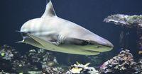 Teil 1: Dinge, die viel gefährlicher und tödlicher als Haiattacken sind