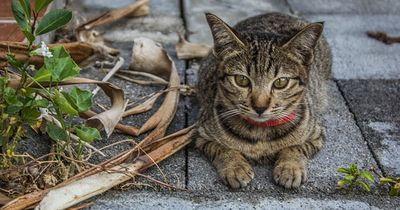 Diese Katze führt ein Doppelleben